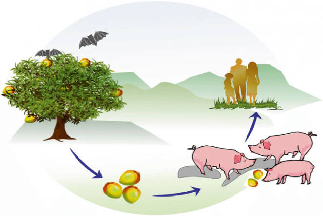 know about Nipah Virus Infection